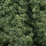 Foliage Clusters- Medium Green