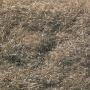 Static Flock- Burnt Grass